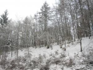 Winter. Tot. Depressionen. Bäume im Schnee.